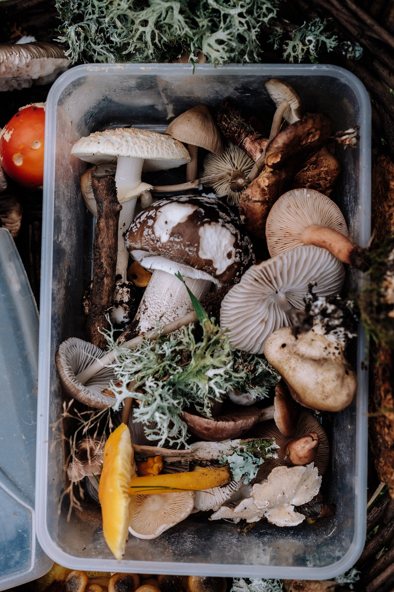 mushrooms-annie-spratt-215779-unsplash
