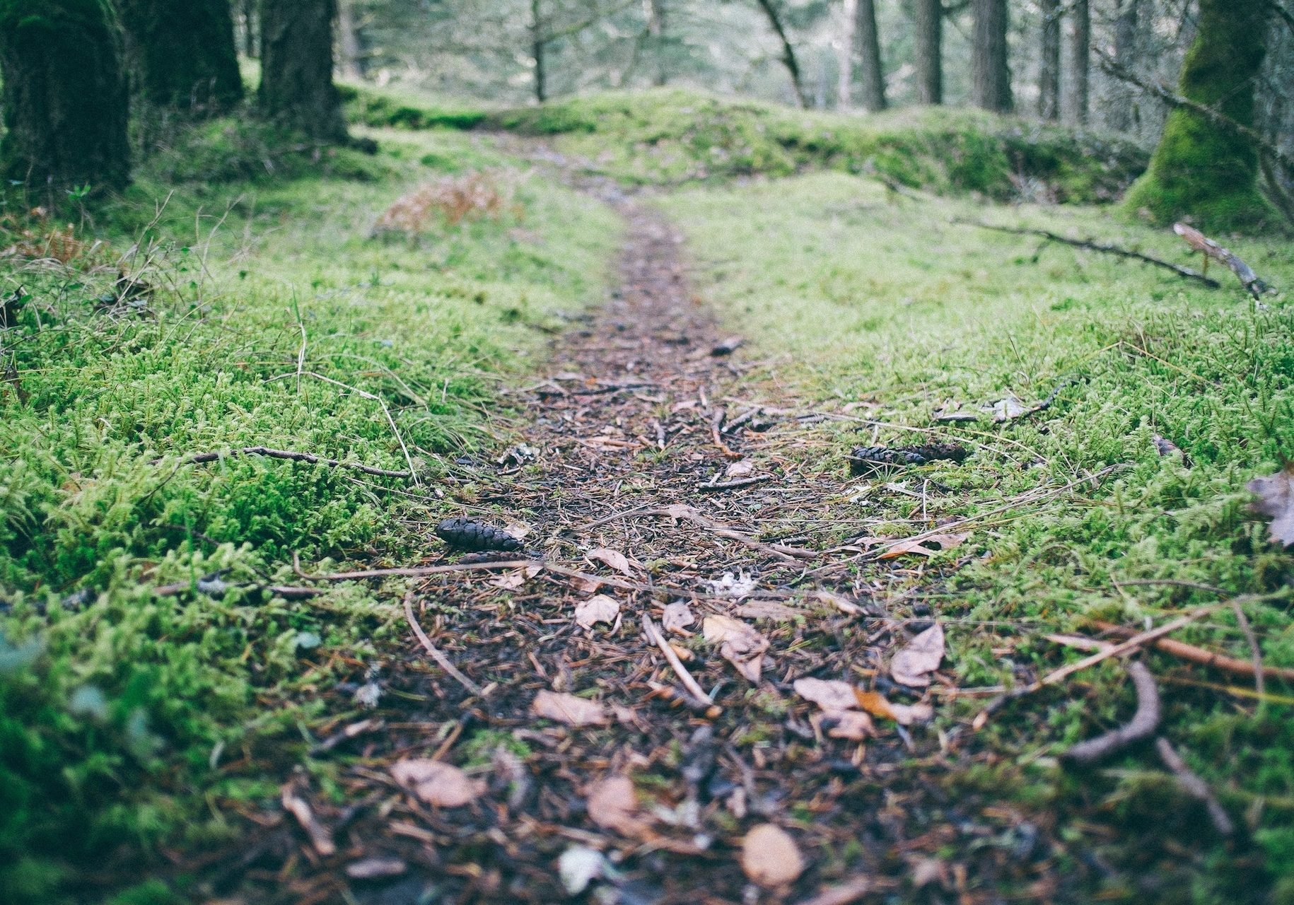 Path-paul-jarvis-217-unsplash